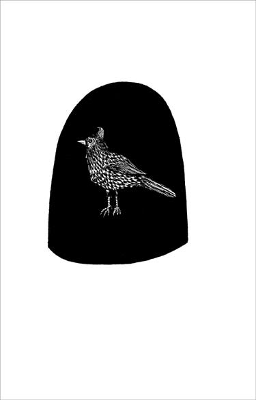 """""""Le pigeon des iles"""", encre de Chine sur papier, 14 cm x 21 cm, 2009"""